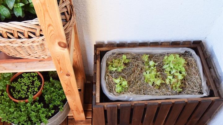 Ako si vysadiť box na pestovanie