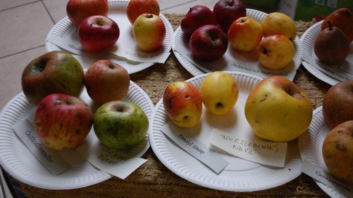 Bielokarpatský ovocný poklad
