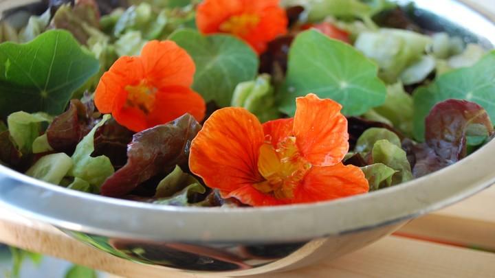Nasturtium in a salad