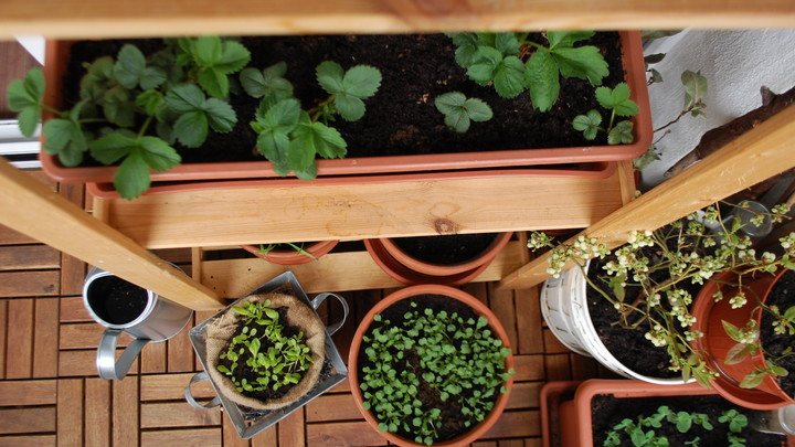 Ako vyzerá začiatok jari v našej balkónovej záhradke