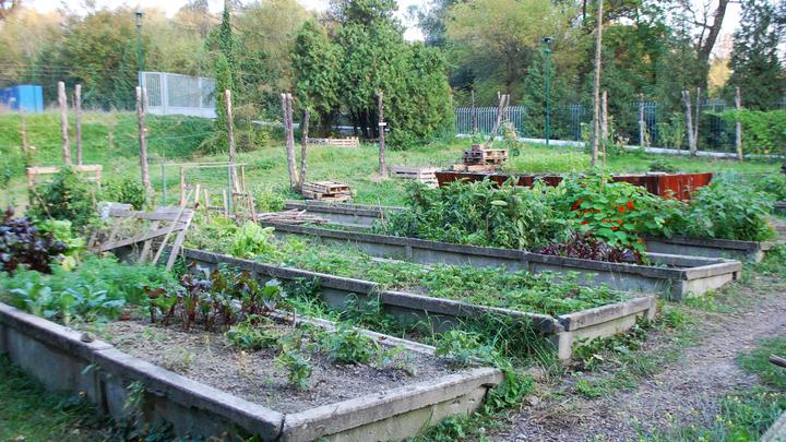 Vodárenská komunitná záhrada BVS