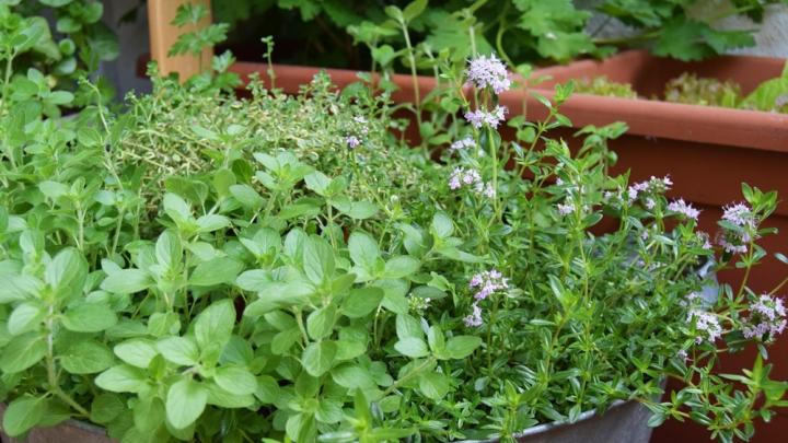 Čo robiť na záhradke v máji?