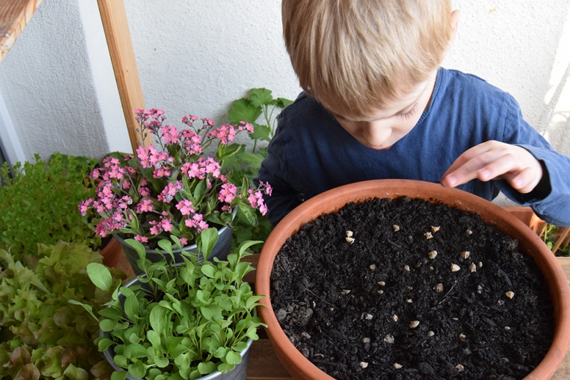 a child sowing spinach seeds