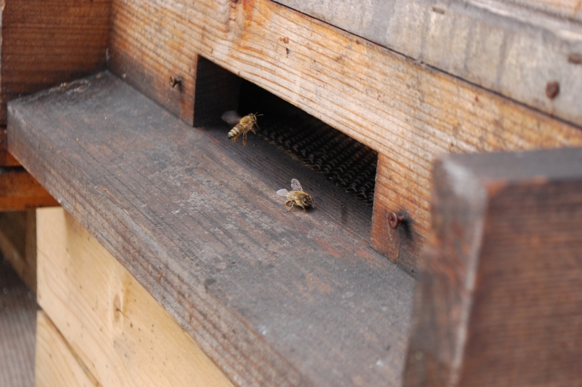 bees on the roof in Bratislava Stara trznica