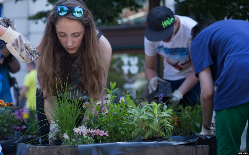 Planting flowers on a public square