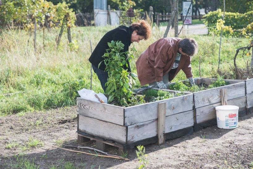 Vinica a mobilna zahrada Pionierska